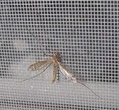 Tela mosquiteira